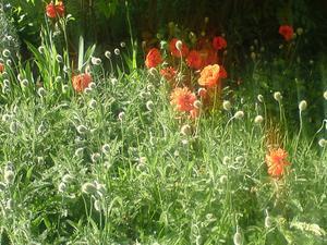 Blomster 3 Juni 2010