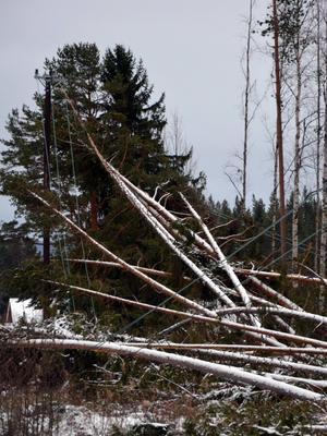 Många fastighetsägare led stor ekonomisk förlust när deras skog föll.