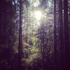 En skogspromenad tillsammans med hunden , där solens strålar börjar värma upp våren