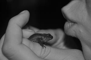 Jag och min vän var ute sent en augusti-kväll och hittade massvis med små grodor som vi plockade upp och sedan fick jag till den här fräcka bilden!