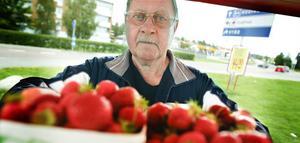 Erik Andrén, Ljusdal, säljer jordgubbar åt Bröderna Ljungberg och märker hur det blir glesare i kundleden efter en intensiv sommar.