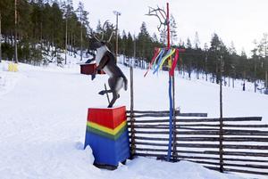 Den samiska parken Lopme Lante vid Björnvallen är en av nyheterna i Björnrike.