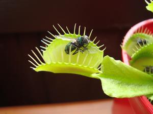 insektsfångare från åsby