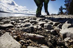 Granaterna är mycket svåra att upptäcka där de ligger inbäddade i stranden. Färgen är nästan exakt som på de omgivande stenarna.
