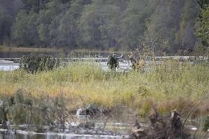 Försvunnen kvinna letas i Stavreviken.