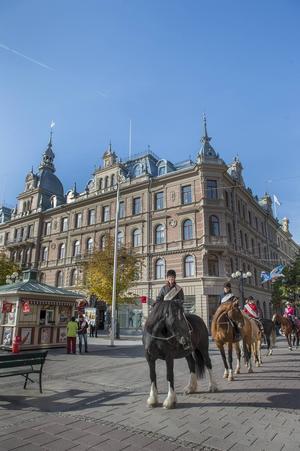 En samling lugna hästar visade upp sig på stora torget.