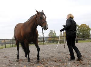 Med små handrörelser får Annika Ahlén sin häst att flytta sig framåt, bakåt och åt sidorna. Metoden, eller snarare filosofin, bygger på respekt och gedigna kunskaper om hästars beteende.