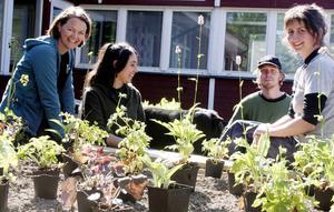 Slutspurten. I dag, onsdag, invigs trädgårdsmästarelevernas projekt på Fyren i Norrsundet. Malin Flodström, Yohanna Amselem, Karl Persson och Malin Wedrén är gruppen som utformat trädgårdsytan.