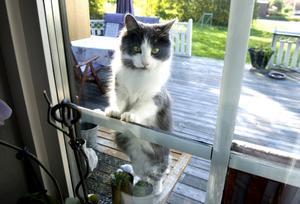 Katten Grace Lily har varit en stor hjälp under resan mot ett tillfrisknande.