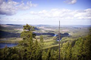 Ångermanlands skogar är ett lapptäcke av hyggen och återväxt.