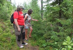 Lena Liljemark och Elisasbeth Nilsson berättar om växter och naturen under vandringarna.
