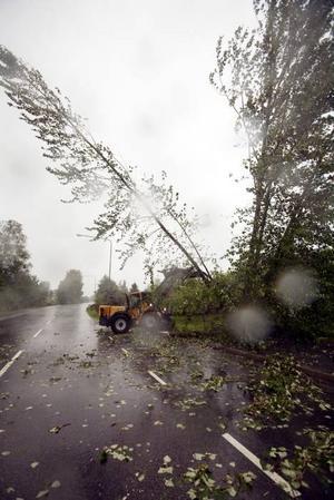 Medan Rolf Öhlund jobbar med att få bort träd från körbanan är ännu ett på vippen att falla.