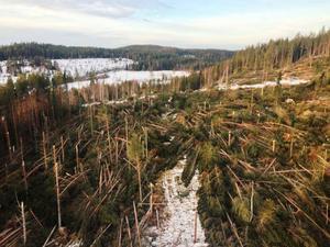 Förödelsen för länets skogsägare är stor efter stormen Ivars framfart. Här är en bild från skadorna på skog vid Döviken, strax norr om Dövikssjön, Bräcke.