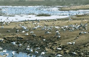 Kommer morgondagens generationer att få njuta av flyttfåglarnas ankomst på våren?  Den frågan ställer sig insändarskribenterna.