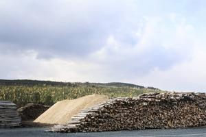 Det är de stora mängderna timmer som plockas ut efter vinterns stormar som gjort att Jämtkraft startat sin anläggning i Järpen.