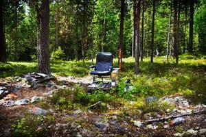 Ett älgpass de luxe dyker upp i en skogsglänta och antyder om livsstilsförändringar i området framöver.