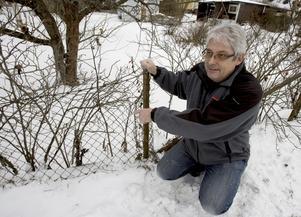 Lars Borgman, Sandviken, visar rosenhäcken där han hittade den försvunne Sandvikenpojken Sebastian Yhr, 10 år, som legat översnöad i sju timmar.