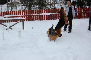 Caisa Strömberg med hundarna Grille och Palle.