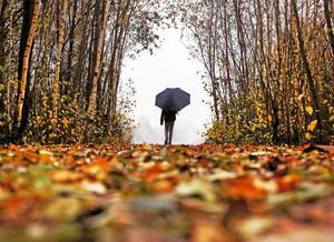 Njut av höstens färger.