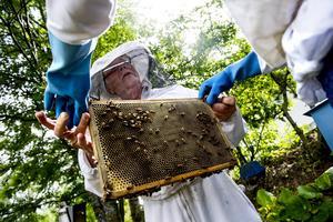 Jan Mikaelsson har varit biodlare i 44 år. Han har 500 000 bin på sin tomt i ett villaområde i Domsjö. Han och frun trivs med sina surriga små vänner.
