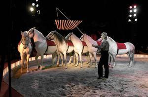 Rüdiger Probst uppträder med cirkushästar.