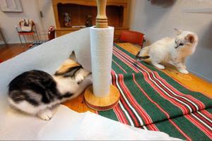 På katthemmet får katterna vara på bordet.