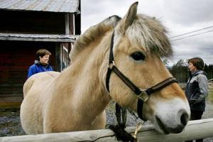 Fjordhästen Center är också utbildad för ridterapi och syns på bilden tillsammans med några ridterapeuter som utbildats på Mittuniversitetet i Östersund.