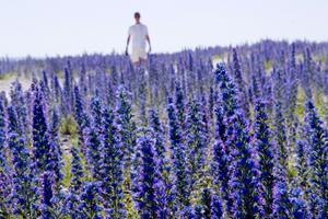 Njut av blomsterprakt på Gotland.