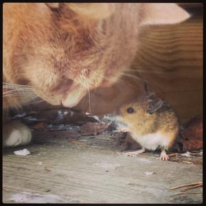 Katten Gösta och hus musen Rut