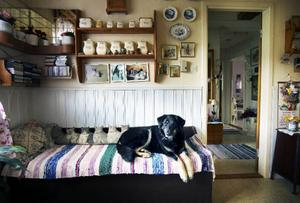 Hunden Tinka har hittat hem.