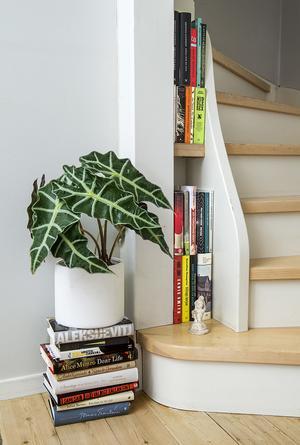 Ljusgråa väggar och gröna växter blir bra på foto enligt mäklare. Foto: Claudio Bresciani / TT
