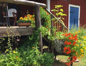 Det mesta hemma hos Elisabett och Mats ramas in av blommor.