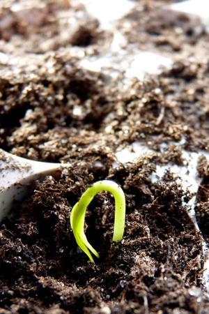 Dags för växtbelysning.