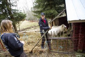 Lovisa Persson och Jonas Eihland fick en av sina tackor dödade, dessutom gjorde björnen skenattacker mot dem själva.