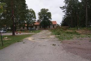 Grannar har reagerat över att Sandvik har sågat ner åtta stycken 150 år gamla träd som stod i allén vid Bruksgården.