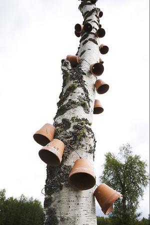 Kvarlämningar från förra årets utställning i Espnäs. Eller har krukorna blivit en del av naturen nu?