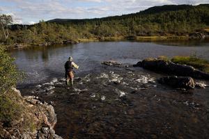 I Stensjöns vattensystem finns endast öring. Sjöarna och strömmarna bjuder på spännande sportfiske i en orörd natur.