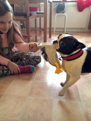 Under nyårshelgen flyttade Märta hem till familjen Edvinsson i Långshyttan. Här leker hon tillsammans med matte Nora, med den första hundleksaken som Nora köpte till Märta.