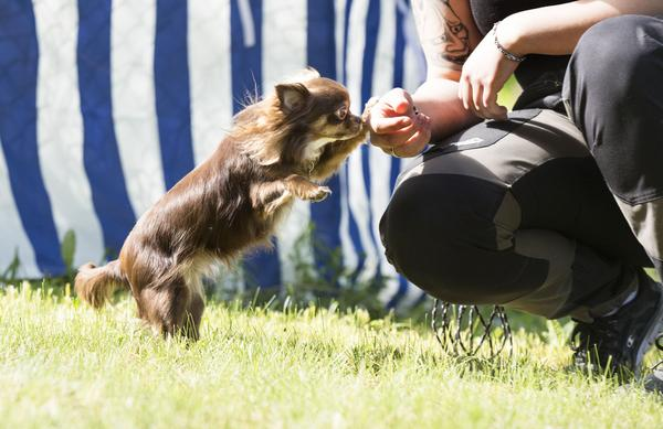 Det spelar ingen roll om man är en liten eller stor hund. Nosen fungerar lika bra.