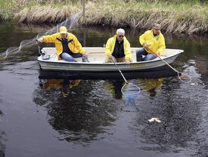 Tre män i en båt, Sigge Nordin, Leif Gustafsson och Karl-Ivar Nässén, fiskade upp vinstbåtarna vid målet.   Foto: Ove Andersson