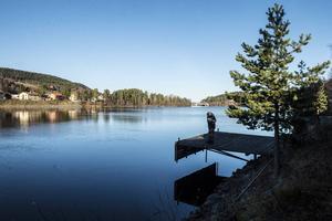 Vid Ljungan nedför Skottsund har Johannes Nordvall sett många fiskar som drabbas av hemska svampangrepp.