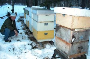 Chockad. Lars Wejher beskådar förödelsen efter helgens sabotage mot hans bikupor