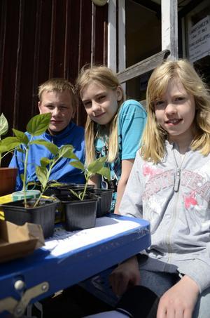 Albin Gräntz, Emanuel Sundin och Simone Kallin representerade Naturklubben på Gnarpsdagen.