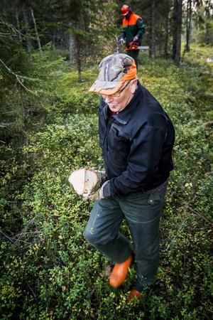 Valter Forsberg drar fram de nykapade stockarna som ska läggas vid ett dike för att underlätta övergången för skoterförarna.
