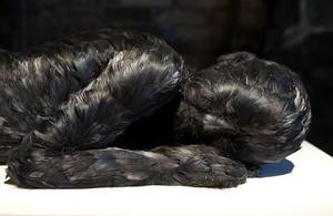 Feather child, Lucy Glendinning.