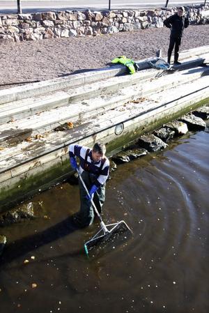 Karparna i bassängen vid Gävle Central fiskades upp i går av bland andra Jörgen Karp från Svenska Lantbruksuniversitetet.