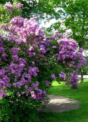 En fin sommarbild från vår vackra Park på Jakobshöjden!!!