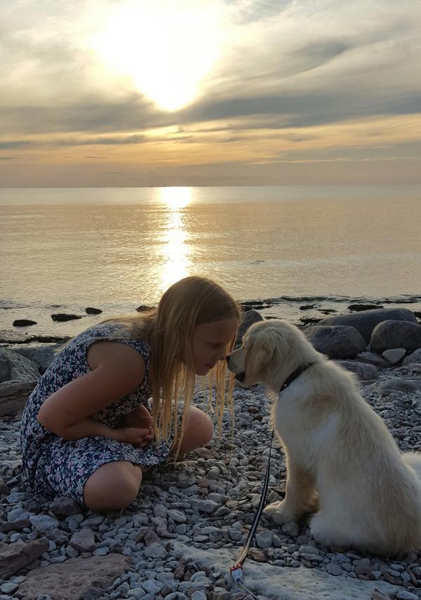 Vendela och valpen Hugo myser i solnedgången
