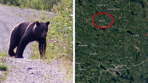 Björnen på bilden har inget med den aktuella händelsen att göra.
