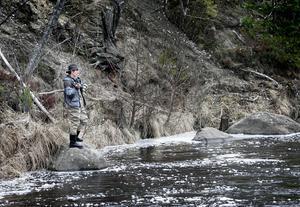 Havsöringsfisket är i gång i Harmångersån och fiskelyckan är god. Sven Åhs, från Delsbo fiskar i Harmångersån ett par gånger varje år. Han gillar fisket i ån och menar att man kan få fina öringar där.foto: maria hedblom